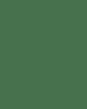 'New Zealand Flora and Fauna' Greeting Card (set of 4) - Series 1